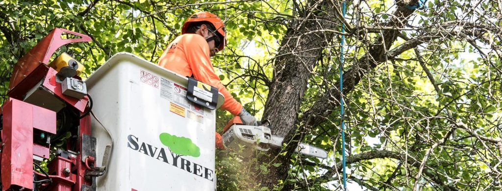 Arborist-Consultations-Bakersfield Tree Trimming and Stump Grinding Services-We Offer Tree Trimming Services, Tree Removal, Tree Pruning, Tree Cutting, Residential and Commercial Tree Trimming Services, Storm Damage, Emergency Tree Removal, Land Clearing, Tree Companies, Tree Care Service, Stump Grinding, and we're the Best Tree Trimming Company Near You Guaranteed!