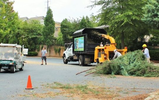 Commercial-Tree-Services-Bakersfield Tree Trimming and Stump Grinding Services-We Offer Tree Trimming Services, Tree Removal, Tree Pruning, Tree Cutting, Residential and Commercial Tree Trimming Services, Storm Damage, Emergency Tree Removal, Land Clearing, Tree Companies, Tree Care Service, Stump Grinding, and we're the Best Tree Trimming Company Near You Guaranteed!