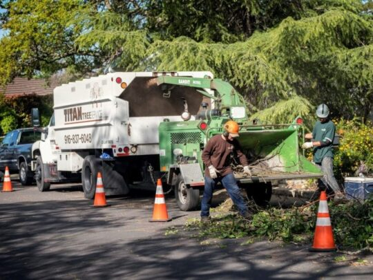 Residential-Tree-Services-Bakersfield Tree Trimming and Stump Grinding Services-We Offer Tree Trimming Services, Tree Removal, Tree Pruning, Tree Cutting, Residential and Commercial Tree Trimming Services, Storm Damage, Emergency Tree Removal, Land Clearing, Tree Companies, Tree Care Service, Stump Grinding, and we're the Best Tree Trimming Company Near You Guaranteed!