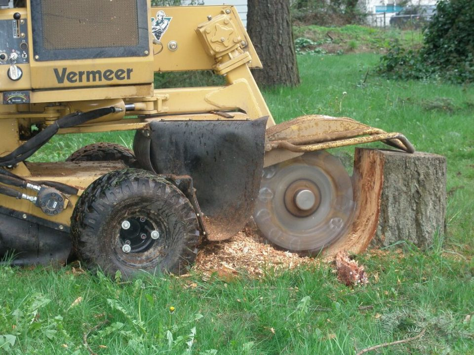 Stump-Grinding-Bakersfield Tree Trimming and Stump Grinding Services-We Offer Tree Trimming Services, Tree Removal, Tree Pruning, Tree Cutting, Residential and Commercial Tree Trimming Services, Storm Damage, Emergency Tree Removal, Land Clearing, Tree Companies, Tree Care Service, Stump Grinding, and we're the Best Tree Trimming Company Near You Guaranteed!
