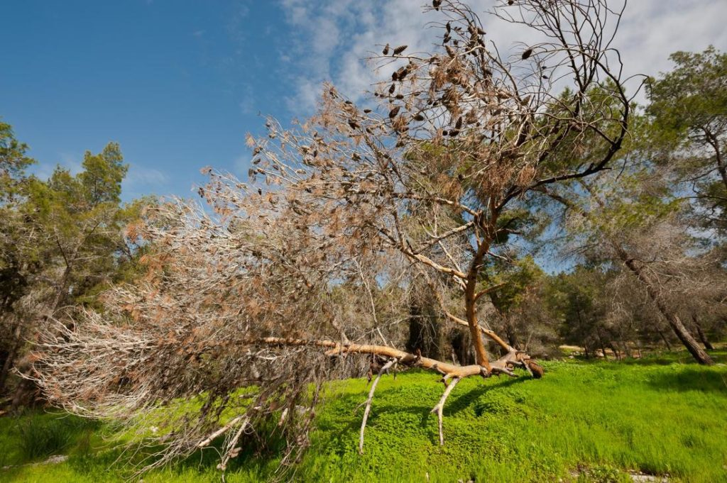 Tree-Assessments-Bakersfield Tree Trimming and Stump Grinding Services-We Offer Tree Trimming Services, Tree Removal, Tree Pruning, Tree Cutting, Residential and Commercial Tree Trimming Services, Storm Damage, Emergency Tree Removal, Land Clearing, Tree Companies, Tree Care Service, Stump Grinding, and we're the Best Tree Trimming Company Near You Guaranteed!