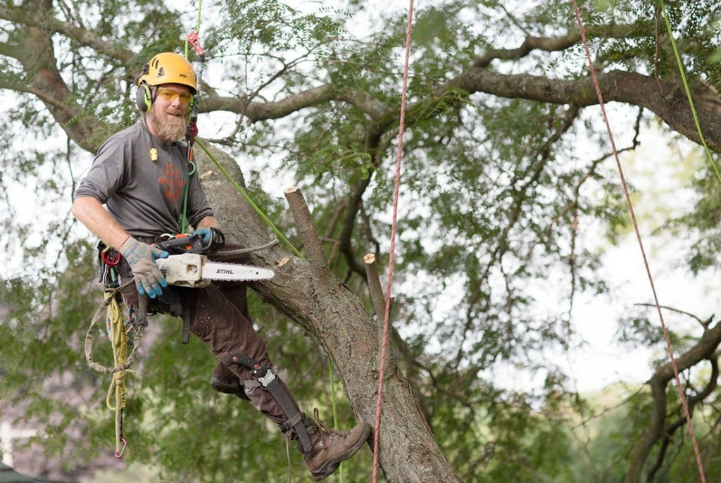 Tree-Cutting-Bakersfield Tree Trimming and Stump Grinding Services-We Offer Tree Trimming Services, Tree Removal, Tree Pruning, Tree Cutting, Residential and Commercial Tree Trimming Services, Storm Damage, Emergency Tree Removal, Land Clearing, Tree Companies, Tree Care Service, Stump Grinding, and we're the Best Tree Trimming Company Near You Guaranteed!