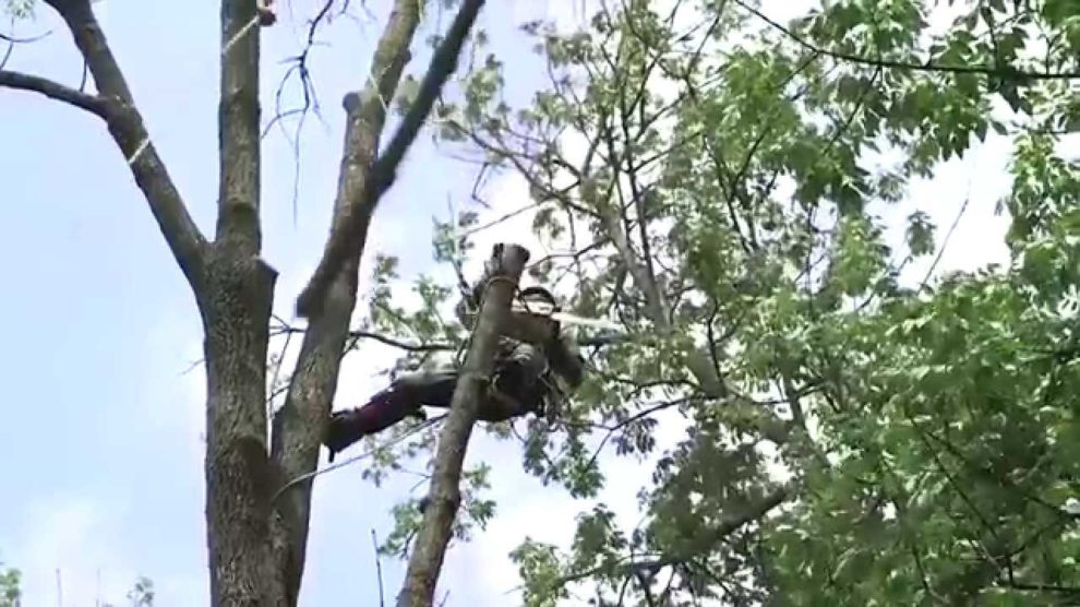Tree-Removal-Bakersfield Tree Trimming and Stump Grinding Services-We Offer Tree Trimming Services, Tree Removal, Tree Pruning, Tree Cutting, Residential and Commercial Tree Trimming Services, Storm Damage, Emergency Tree Removal, Land Clearing, Tree Companies, Tree Care Service, Stump Grinding, and we're the Best Tree Trimming Company Near You Guaranteed!
