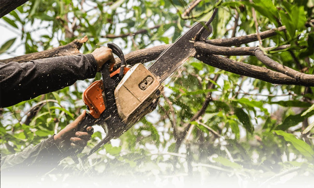 Tree-Trimming-Bakersfield Tree Trimming and Stump Grinding Services-We Offer Tree Trimming Services, Tree Removal, Tree Pruning, Tree Cutting, Residential and Commercial Tree Trimming Services, Storm Damage, Emergency Tree Removal, Land Clearing, Tree Companies, Tree Care Service, Stump Grinding, and we're the Best Tree Trimming Company Near You Guaranteed!